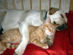 cat-and-dog-sleep